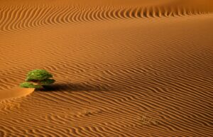 tree in a desert